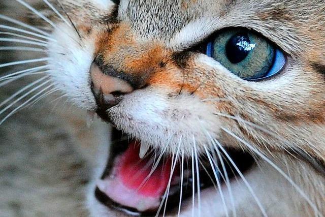 Katze verursacht beinahe Hausbrand