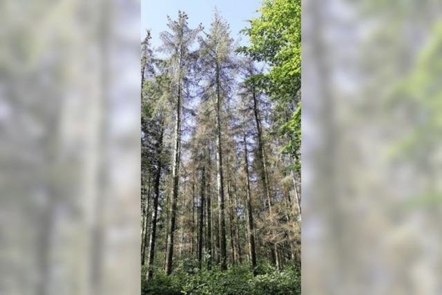 Forderung nach mehr Forstpersonal