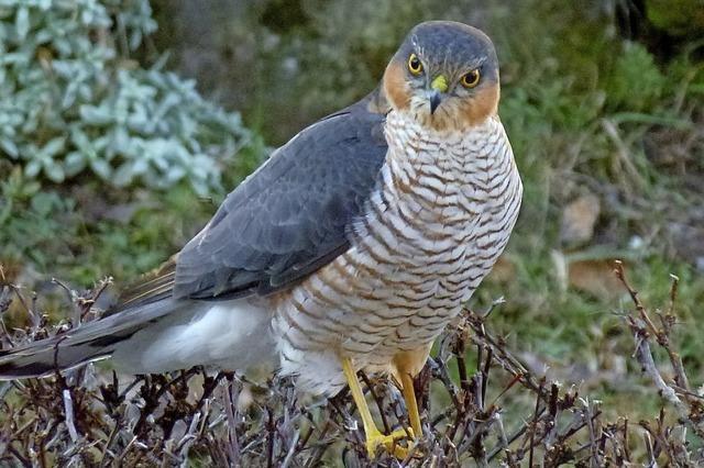 Bunte Vogelvielfalt