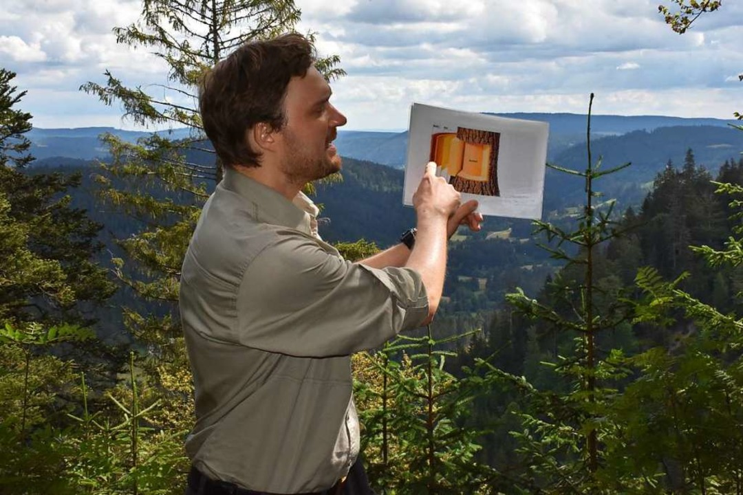 Borkenkäfer-Tour am Feldberg mit Feldb...ert er den Aufbau eines Fichtenstamms.  | Foto: Thomas Biniossek