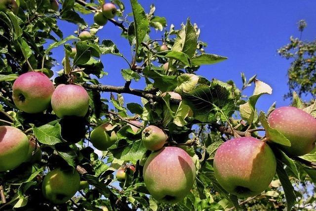 Apfeljahr