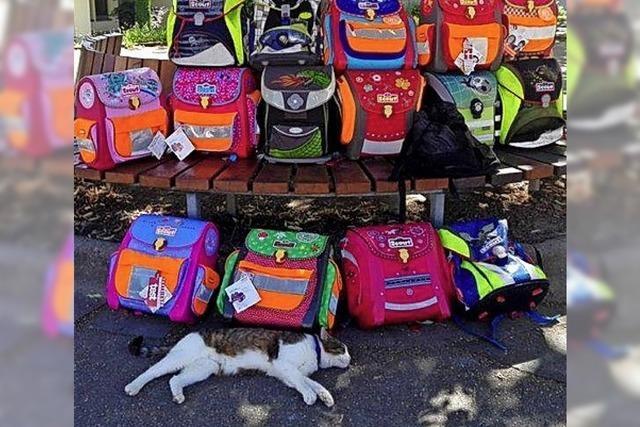 Spenden-Aktion der Grundschule