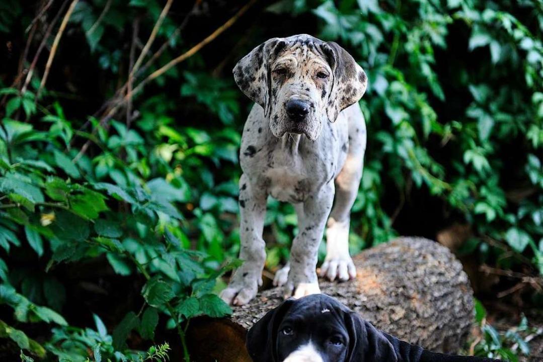 Welpen von Leni und Ares    Foto: Bettina Schaller