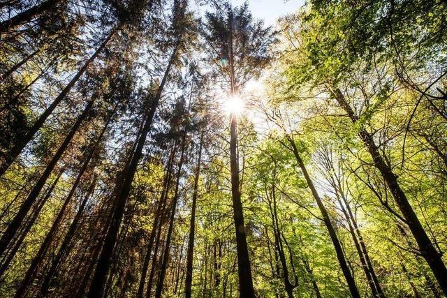 Freiburger Forstamt weist auf hohe Waldbrandgefahr hin