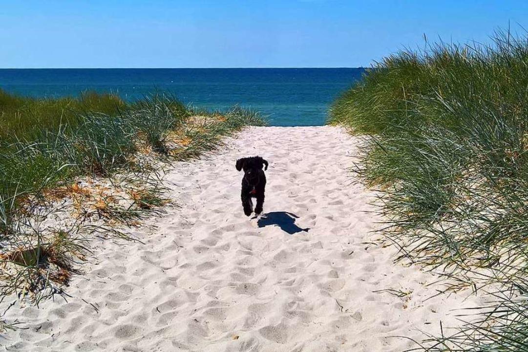 Ostseehund    Foto: Birgit Herrmann