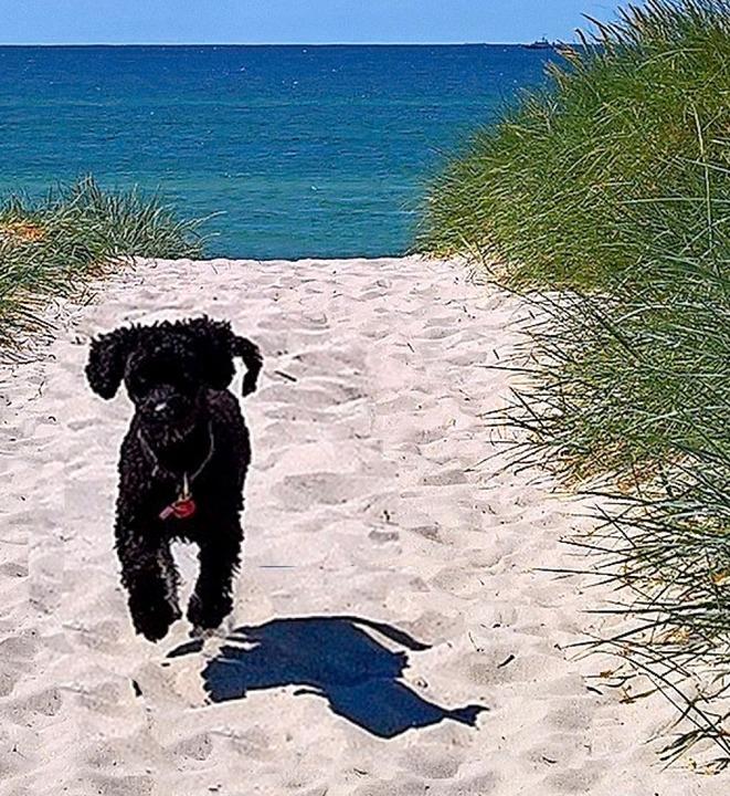 Ostseehund  | Foto: Birgit Herrmann
