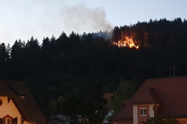 Feuerwehr bekämpfte Waldbrand in unwegsamem Gelände