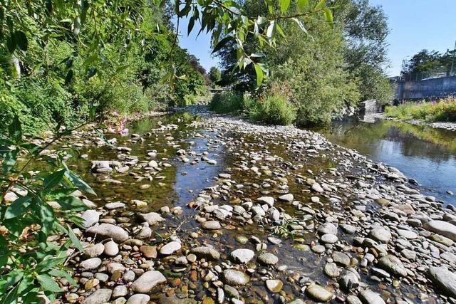 Der Pegel des Flusses Wiese sinkt bei Zell auf ein Rekord-Tief