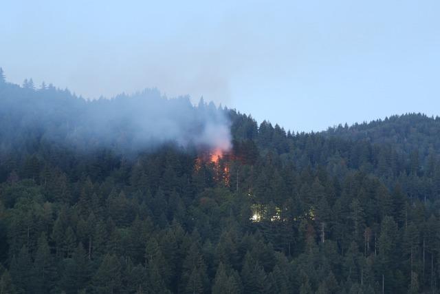 Illegale Feuerstelle könnte Waldbrand in Günterstal ausgelöst haben