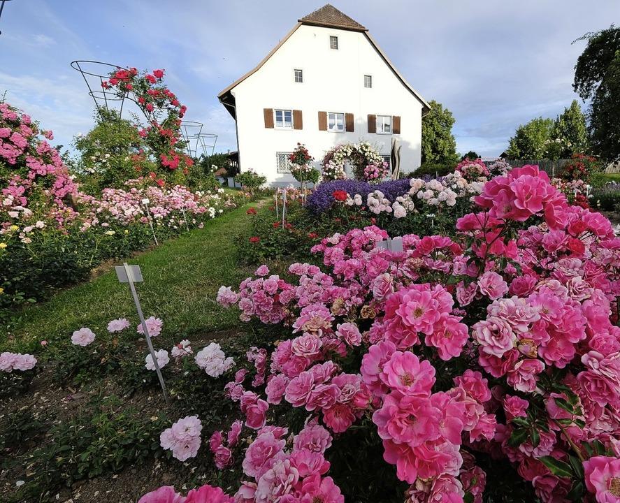 Prächtige Blütenpracht    Foto: Birgit-Cathrin Duval