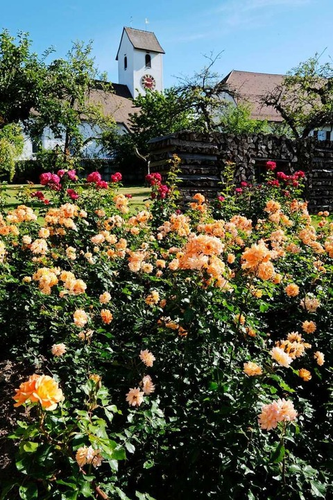 Rosen überall    Foto: Birgit-Cathrin Duval