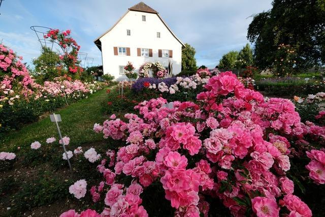 Das Rosendorf Nöggenschwiel lockt mit seiner Blütenpracht