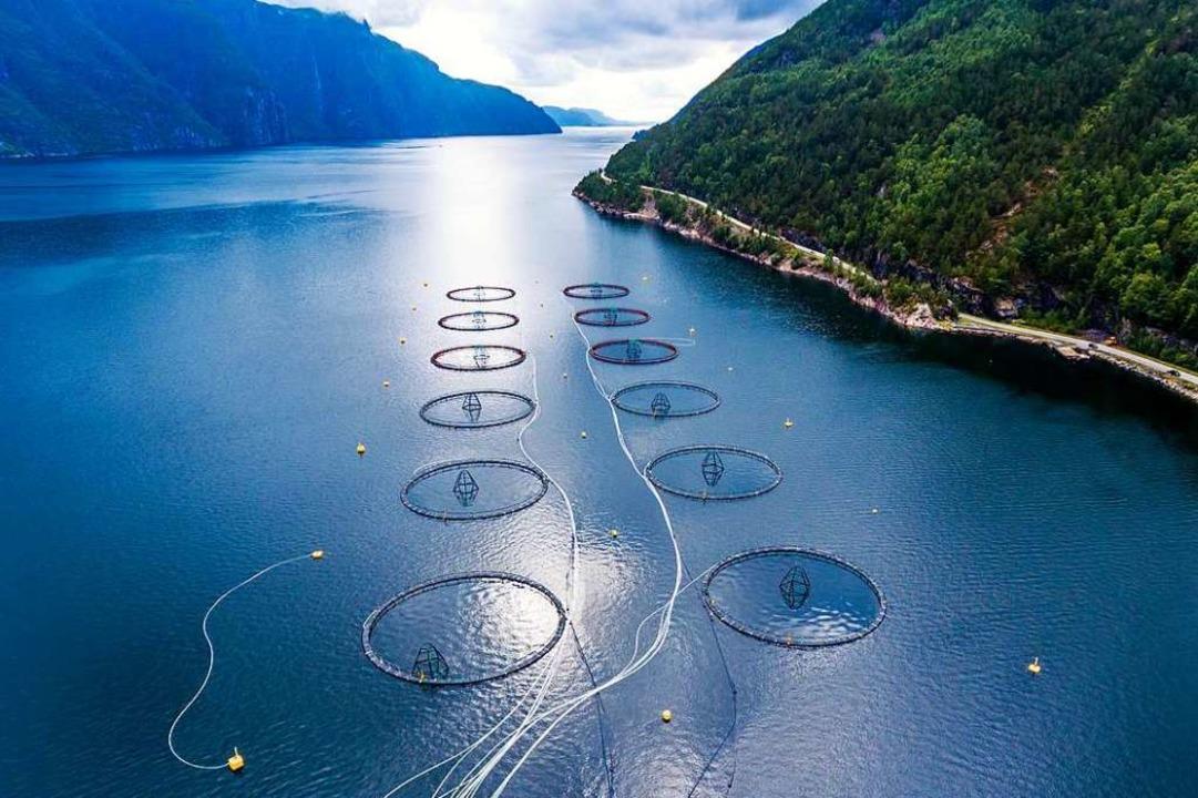 Aquakulturen sollen helfen, die Überfi...zu stoppen: eine Lachsfarm in Norwegen  | Foto: Andrey Armyagov  (stock.adobe.com)