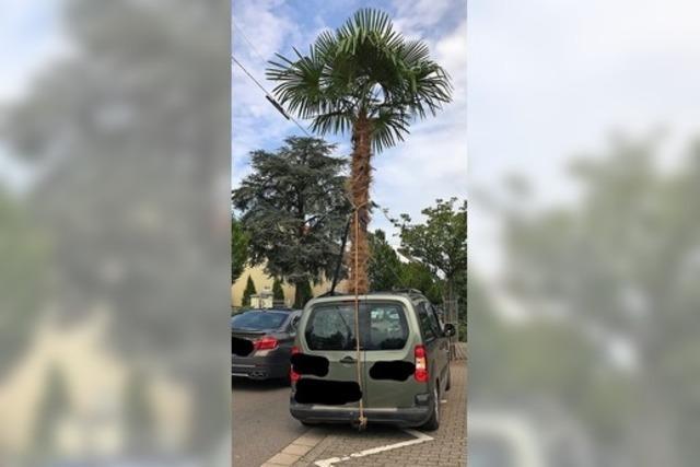 Polizei stoppt in Saarlouis Auto mit riesiger Palme