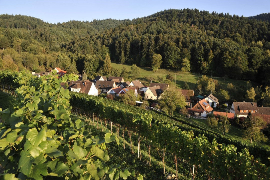 Der Wein wie hier auf dem Muggardt spi...e große Rolle für Müllheims Tourismus.    Foto: Thomas Kunz