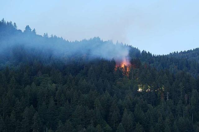 Polizei Freiburg sucht nach Waldbrand im Sternwald nach Mann mit blauem T-Shirt