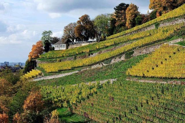 Auf dem Breisgauer Weinweg von Freiburg nach Buchholz
