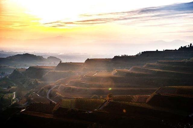 Der Weintourismus in Südbaden hat noch Luft nach oben