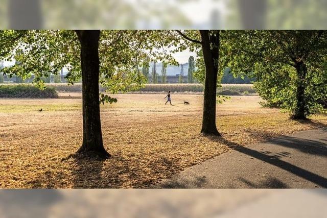 Herbstliche Stimmung im Lörracher Grüttpark