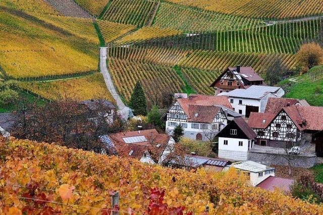 Auf dem Ortenauer Weinpfad von Oberkirch nach Sasbachwalden