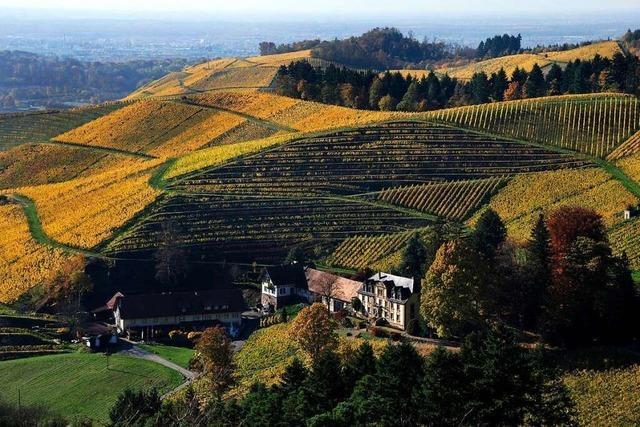 Auf dem Ortenauer Weinpfad von Ortenberg nach Oberkirch