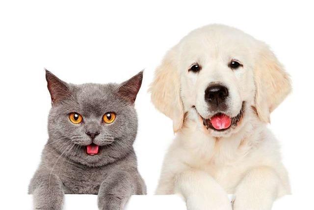 Menschen können Haustiere mit Coronavirus anstecken