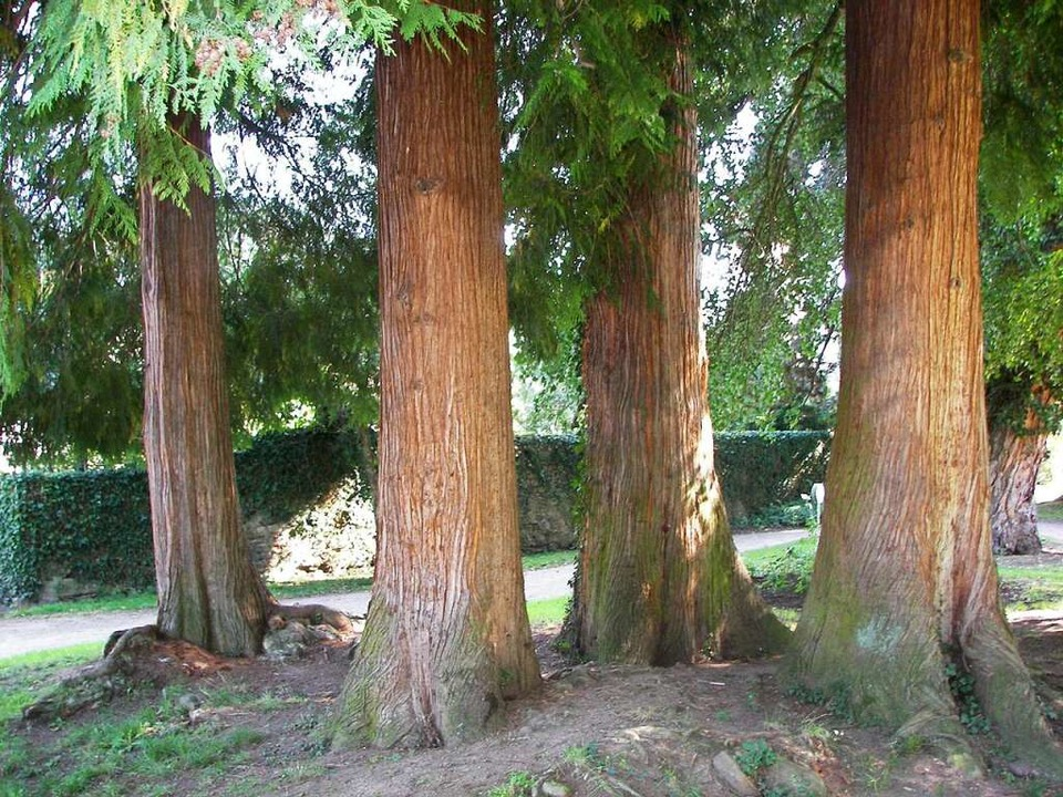 Mit seinen alten Bäumen, Hecken und Mä... der perfekte Ort für ein erstes Date.    Foto: Ulrich Pfefferer