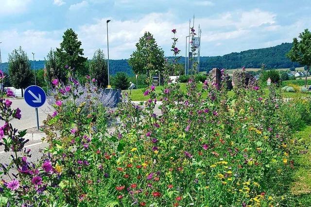 Seelbachs Bauhofleiter liebt es, Wildblumenflächen zu schaffen
