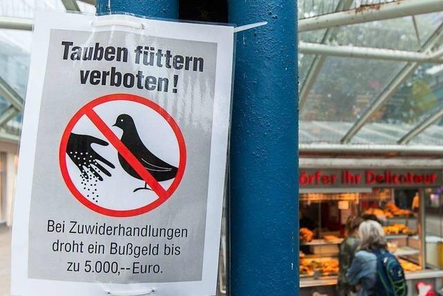Angeklagter hat den Tod einer jungen Taube billigend in Kauf genommen
