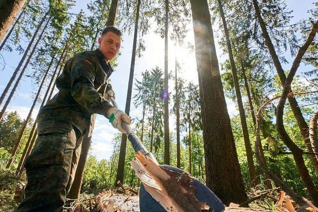 Förster wollen, dass die Bundeswehr im Kampf gegen den Borkenkäfer hilft
