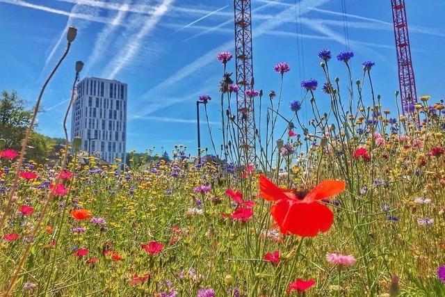 Die Stadt lobt den Fotowettbewerb