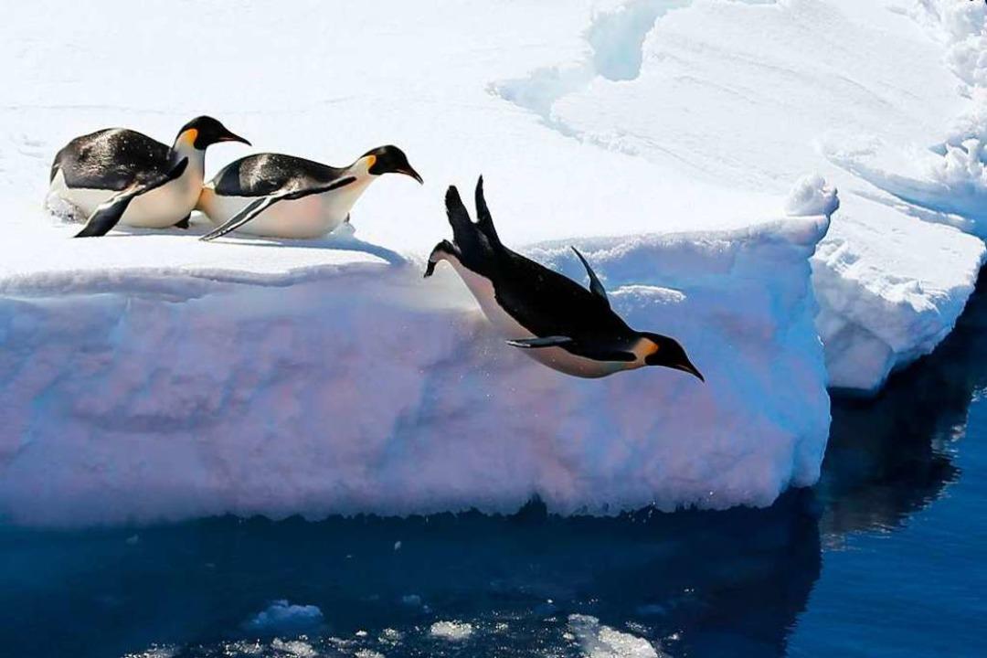 Flugunfähige  Seevögel  | Foto: Liu Shiping (dpa)