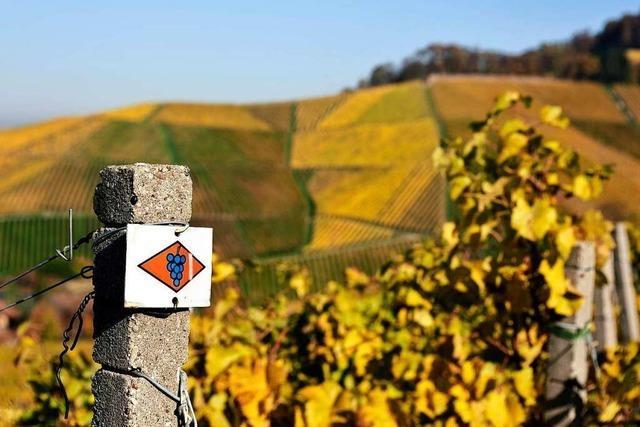 Auf dem Ortenauer Weinpfad von Diersburg nach Ortenberg