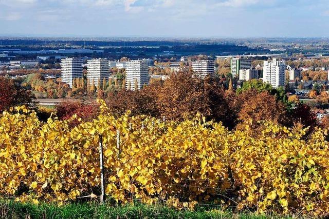 Auf dem Breisgauer Weinweg von Lahr nach Diersburg