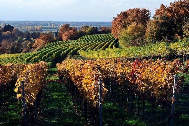 Auf dem Breisgauer Weinweg von Ettenheim nach Lahr