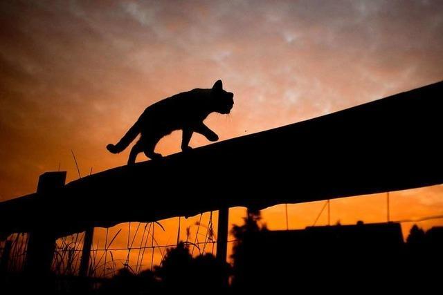Polizisten retten Katze aus Kasten eines Rolltors