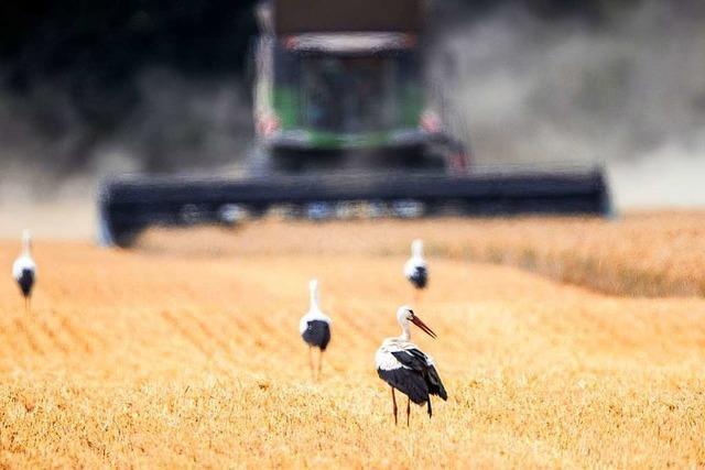 Kein schlechtes Jahr für die Landwirte