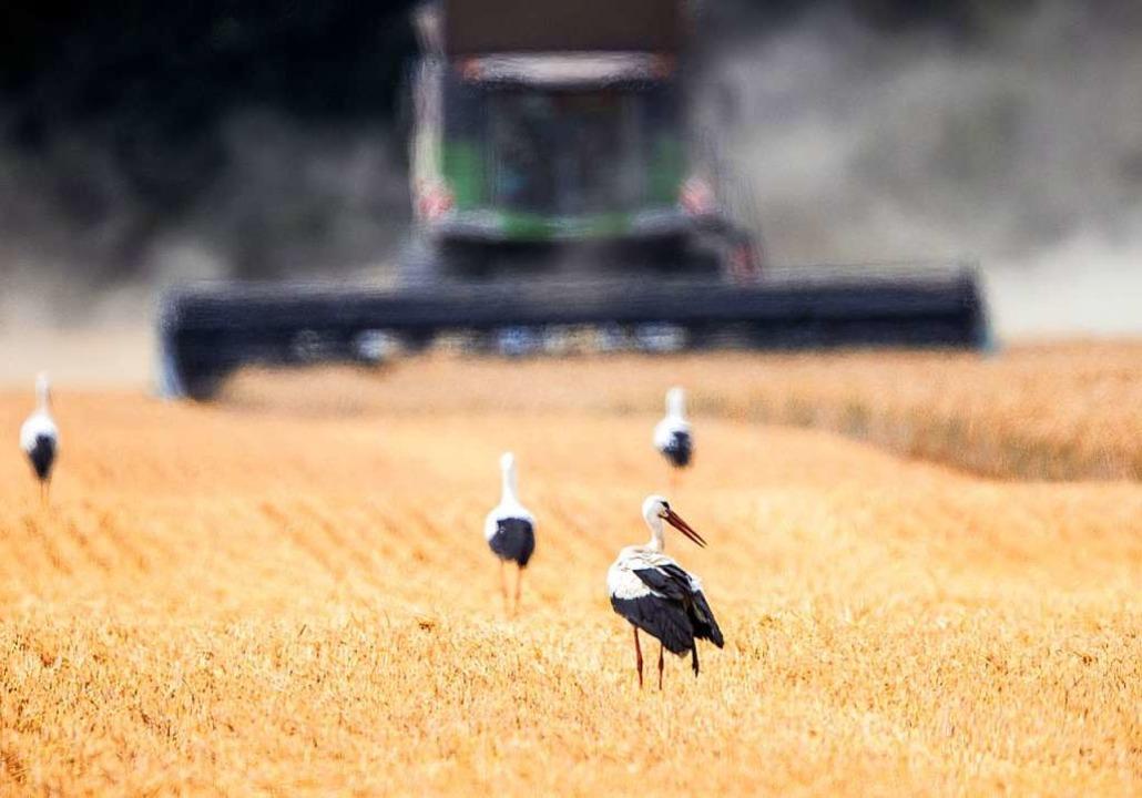 Nicht nur die Bauern sind mit der Ernte zufrieden.    Foto: Jens Büttner (dpa)