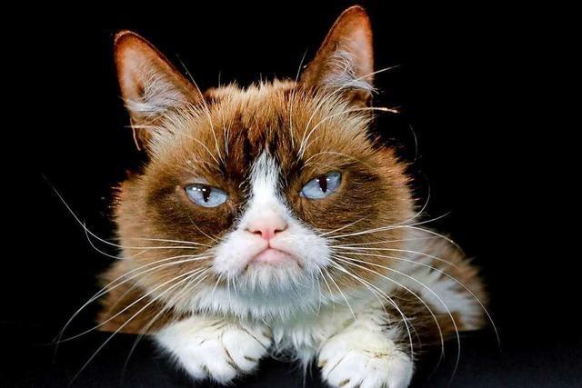Deutsche Gerichte haben immer wieder mit Katzen und deren Taten zu tun