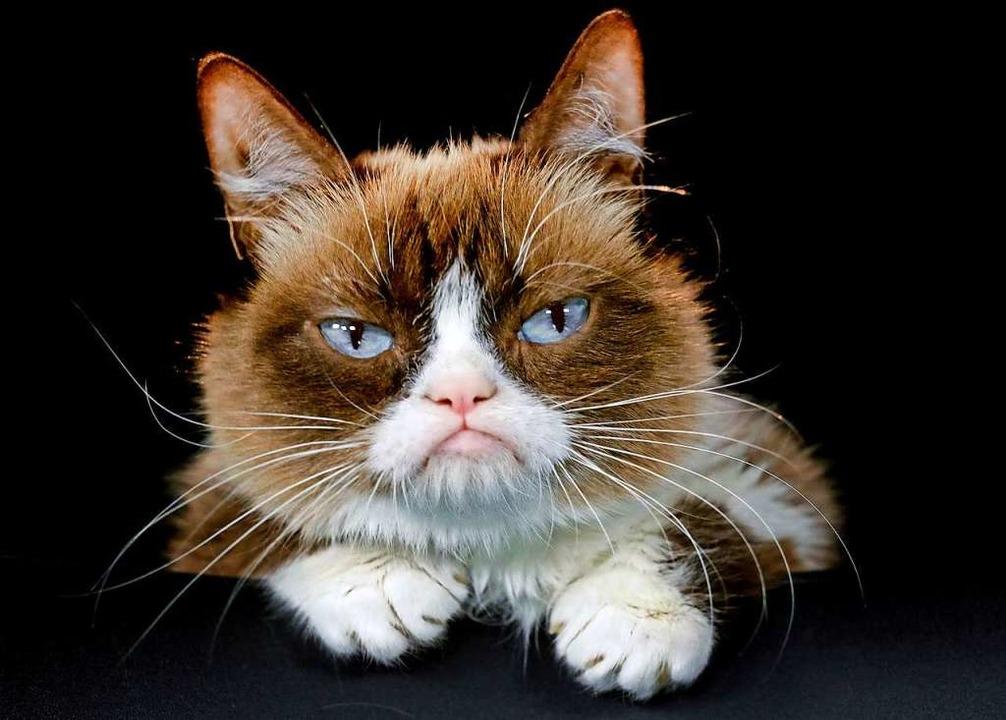 Am 8. August ist der Internationale Tag der Katze.  | Foto: Richard Vogel (dpa)