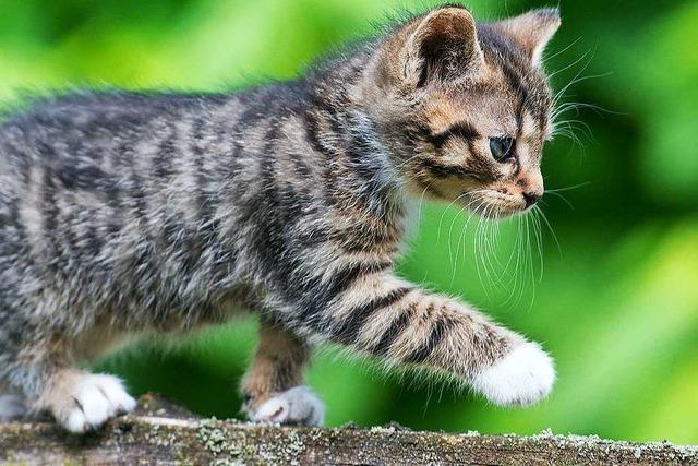 Die schönsten Katzenfotos