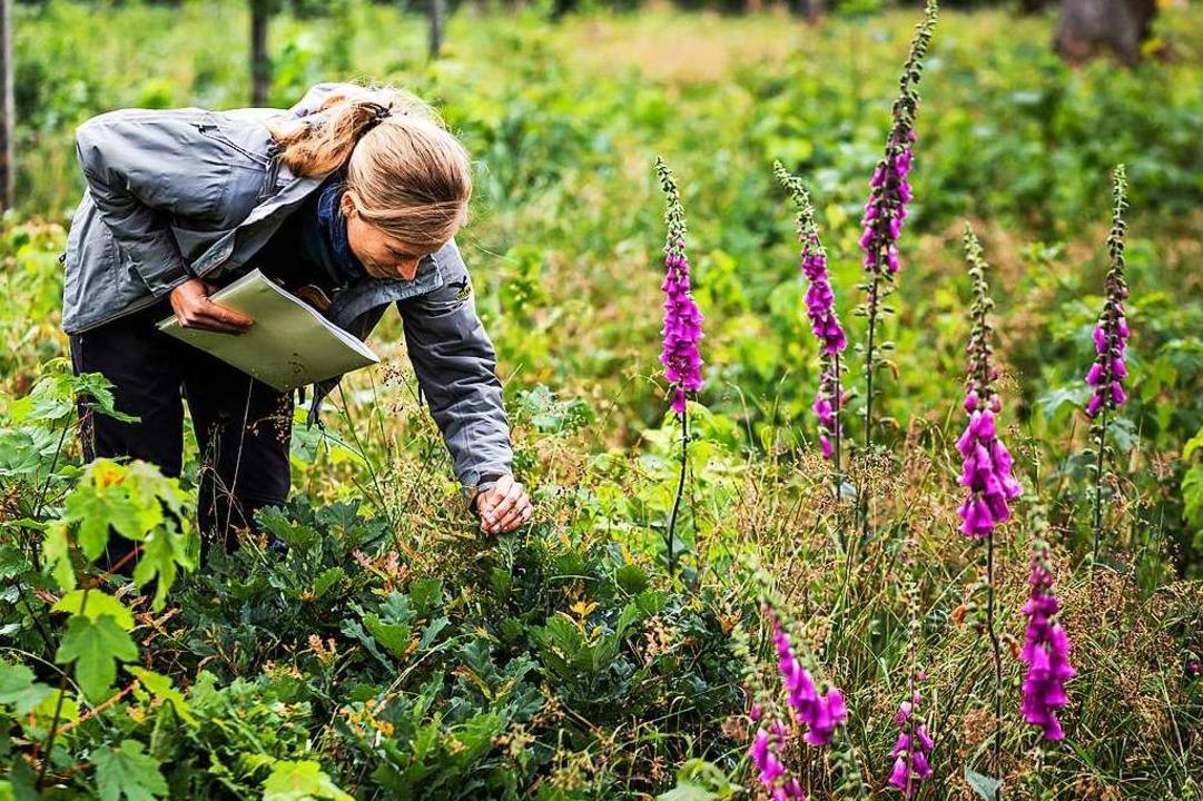 Försterin Christine Weinig steht auf e...Naherholungsgebiet beliebten Eichwald.  | Foto: von Ditfurth,Philipp