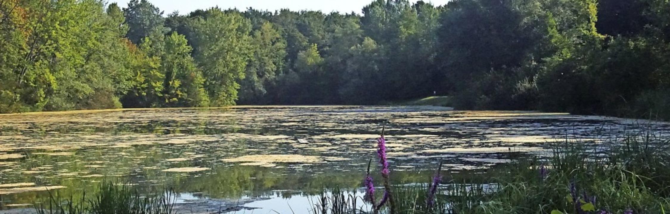 Am Weisweiler Badesee wurden Steg und ...eit hohes Algenwachstum im Wasser.      | Foto: Ilona Huege