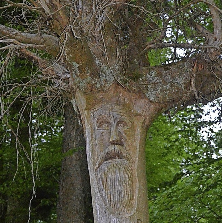Erlebnis Bannwald    Foto: Maja Tolsdorf