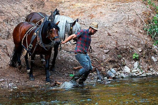 Heuernte wie vor 100 Jahren: In der Wutachschlucht kommen Pferde zum Einsatz