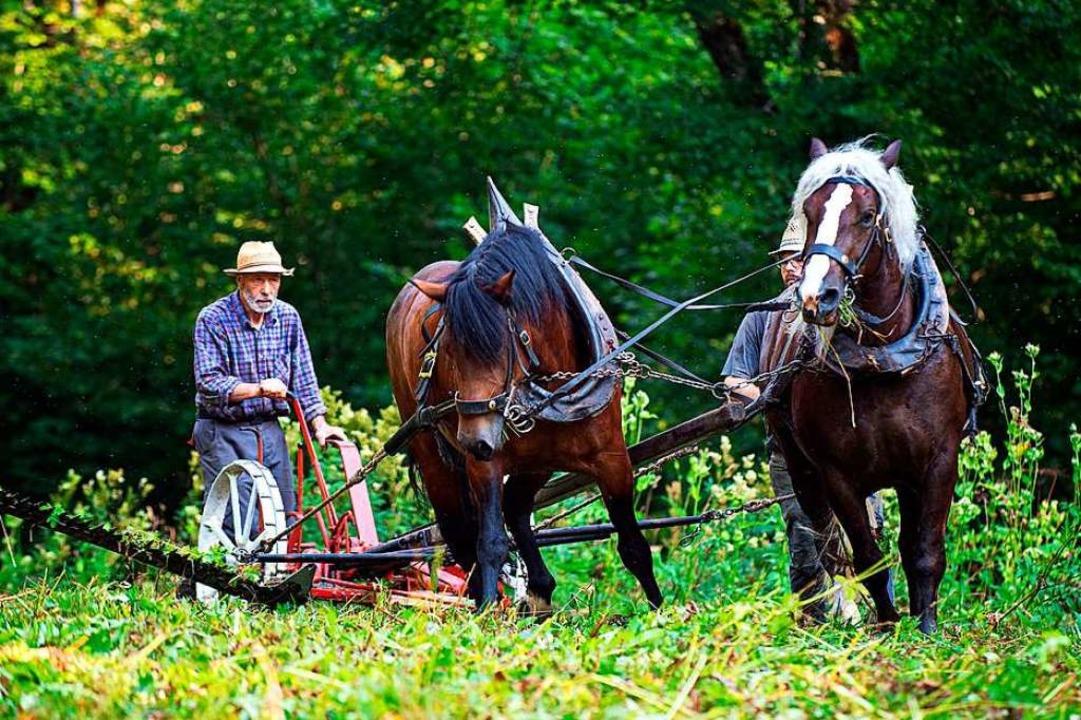 Naturschutz mit zwei Pferdestärken &#8...le in der Wutachschlucht bei Bad Boll.  | Foto: Wolfgang Scheu