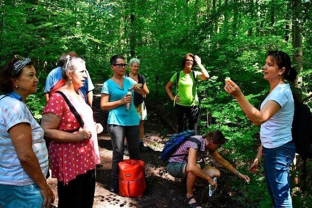 Die Wildkräuterxpertin zeigt, wo sich im Forst Heilkräuter finden lassen
