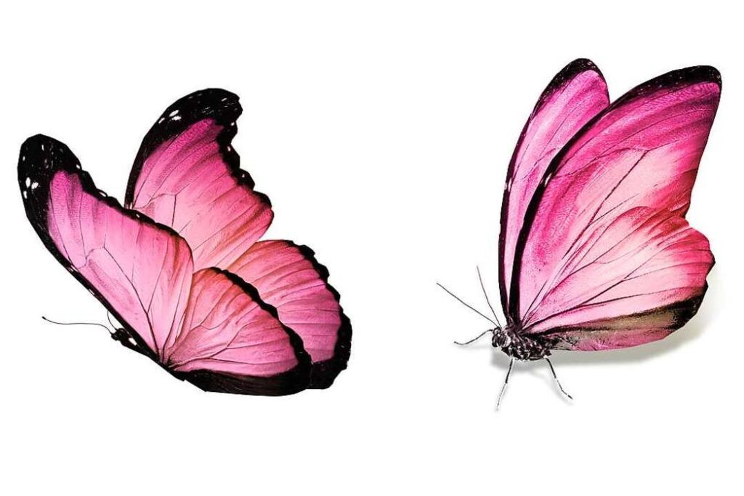 Magenflattern: Schmetterlinge im Bauch werden durch Adrenalin verursacht.    Foto: suns07butterfly