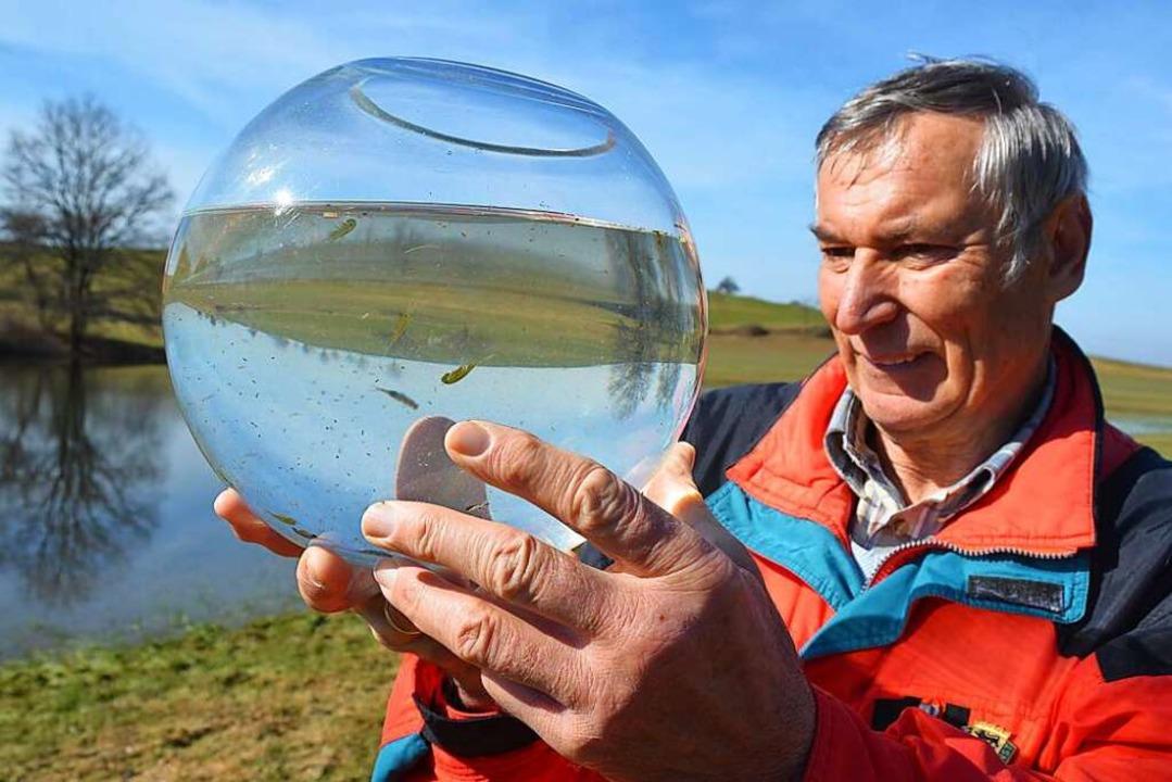 Naturschutzwart Hartmut Heise hält ein...eitkrebsen, die im Eichener See leben.  | Foto: André Hönig
