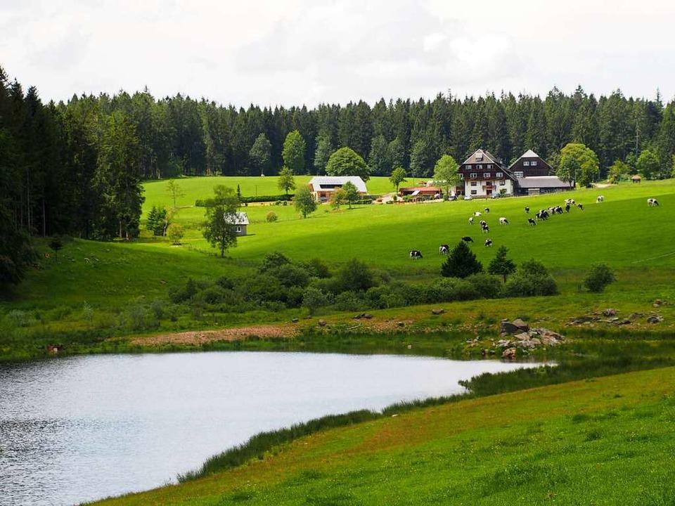 Schwarzwaldidylle am Plattensee.    Foto: Markus Donner